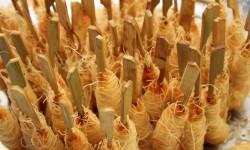 langostino de sanlucar envuelto en pasta griega