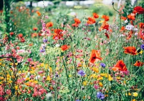 flores floral