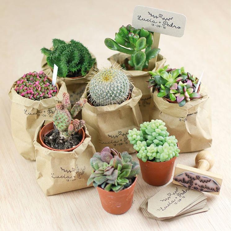 regalos boda cactus